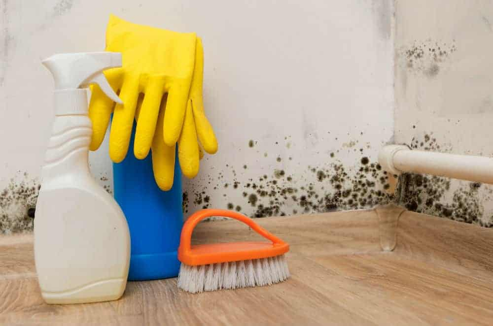 Does Bleach Kill Molds? Or Us too? - Mold Guide 101