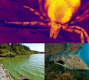 Week 5 - Other Biotoxin Exposures