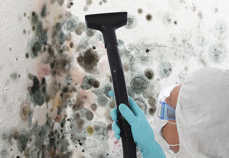 Cost Of Mold Remediation