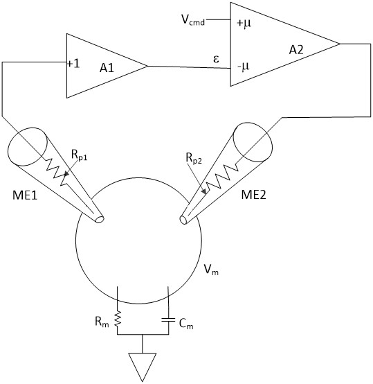What is the two electrode voltage-clamp (TEVC) method