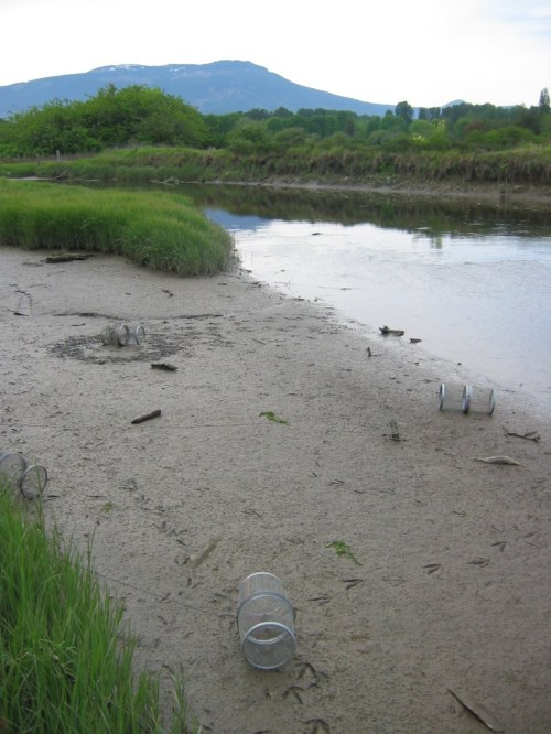 Water bird tracks around stranded traps.