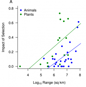 Positive correlation between the impact of natural selection and the geographic range of a species (A) - Figure 2 from Corbett-Detig et al. (2015)