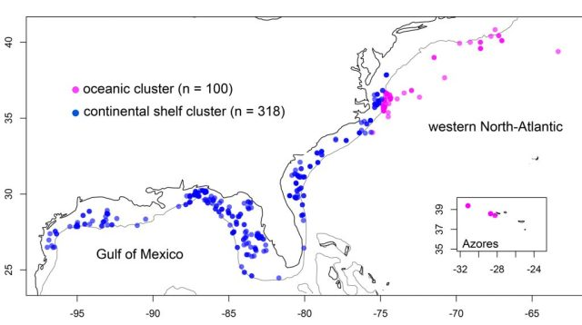 Fig 3: Map showing sampling locations for individuals of the oceanic and continental shelf clusters.