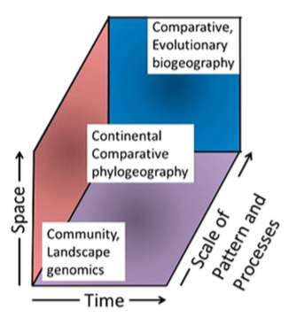 Comparative phylogeography occupies an intermediate position between landscape-level investigations and evolutionary biogeographic studies at higher taxonomic levels.