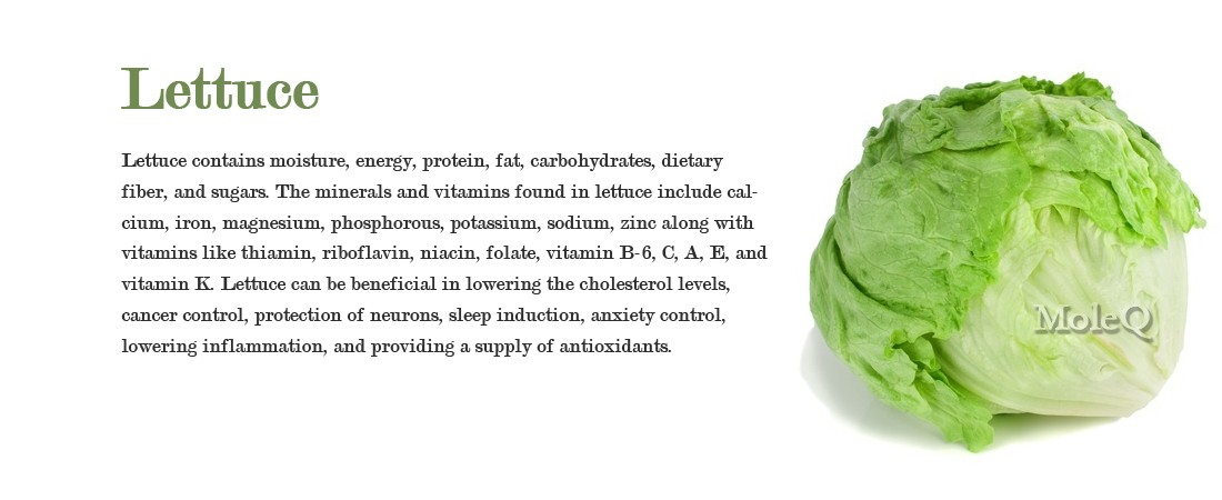 Lettuce – Moleq Inc. – Food Information