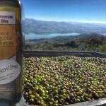 Olearia Terre di Macchia Valfortore - Macchia Valfortore (CB)