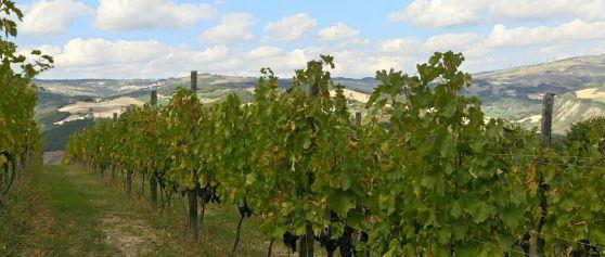 """La """"Cantina Herero"""": sostenibilità e modernità per un vino molisano giovane e ambizioso"""