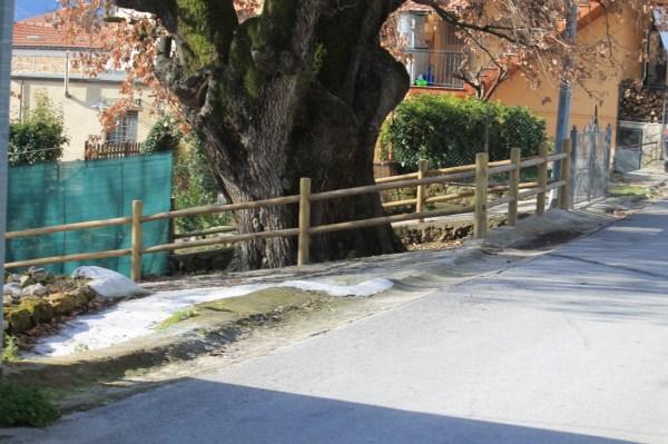 La Grande quercia di Rocchetta a Volturno (2)