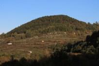 Foto di Alberi e Boschi a Chiauci