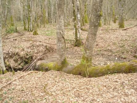 Selva di Castiglione