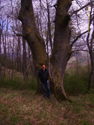 La quercia è situata in localita Padule Piane a Belmonte del Sannio, ha una circonferenza di ml 5,40 (1.30 di h) ed una altezza di circa 30 ml