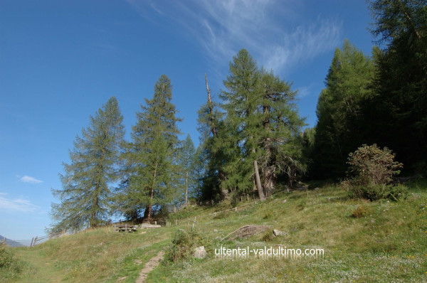 I Larici di Val d'Ultimo