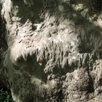 Albero del Piccioni