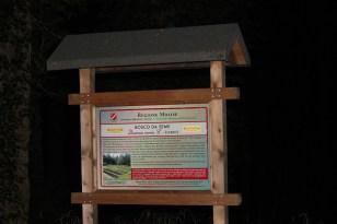 Bosco da Seme di Cerro a Chiauci Monte Lupone