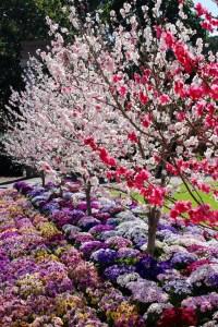 Spring Time Inspiration
