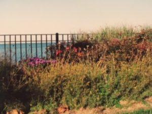 GP Park Landscape