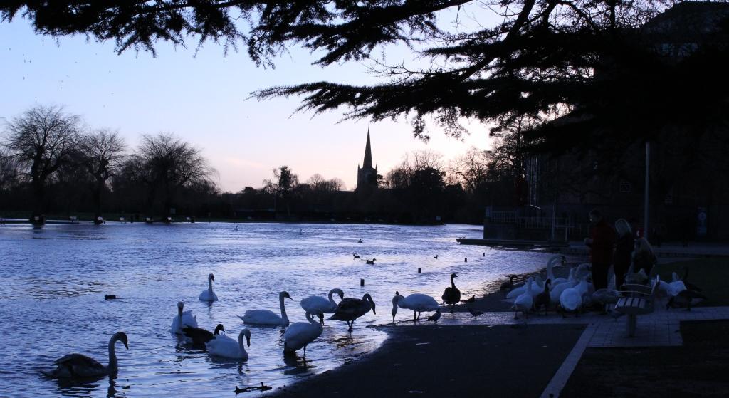 Stratford-Swans