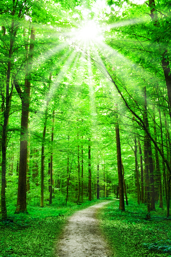 Studying Quotes Wallpaper Forest Therapy Why A Walk In The Woods May Be Just What