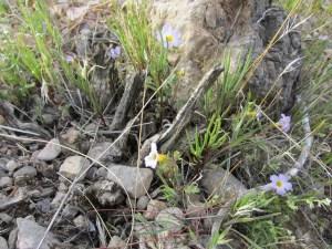flowers growing among rocks