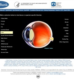 data on specific tissues can be selected by text or image links here lens is selected the page also contains text links to data organized by species and  [ 1500 x 1270 Pixel ]