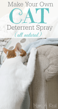 DIY Dog Deterrent Spray - Helps Stop Indoor Accidents and ...