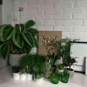 De mini Urban Jungle van Annemarel – Planten in huis