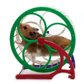 Is your kid on the homework hamster wheel? What are the effects of too much homework? The emotional effects of too much homework? Sleep deprivation in students The pros and cons of AP classes How many AP classes should you take?