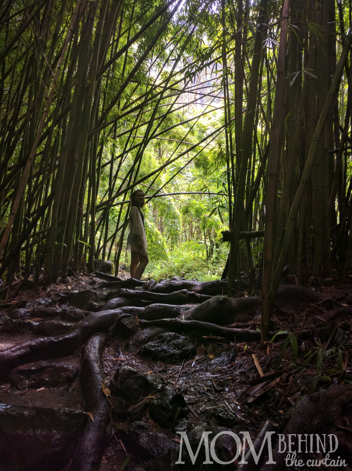 Tips for hiking the Bamboo Forest on Maui.