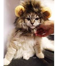 20 Halloween Costumes for Dogs & Cats #Halloween #Pets