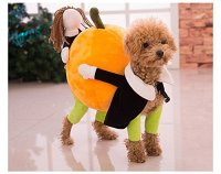 Tips for Trick or Treating with your Pet! #Halloween