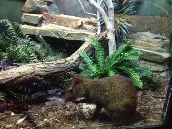 mouse house bronx zoo