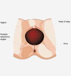 diagram of vagina [ 1200 x 1350 Pixel ]