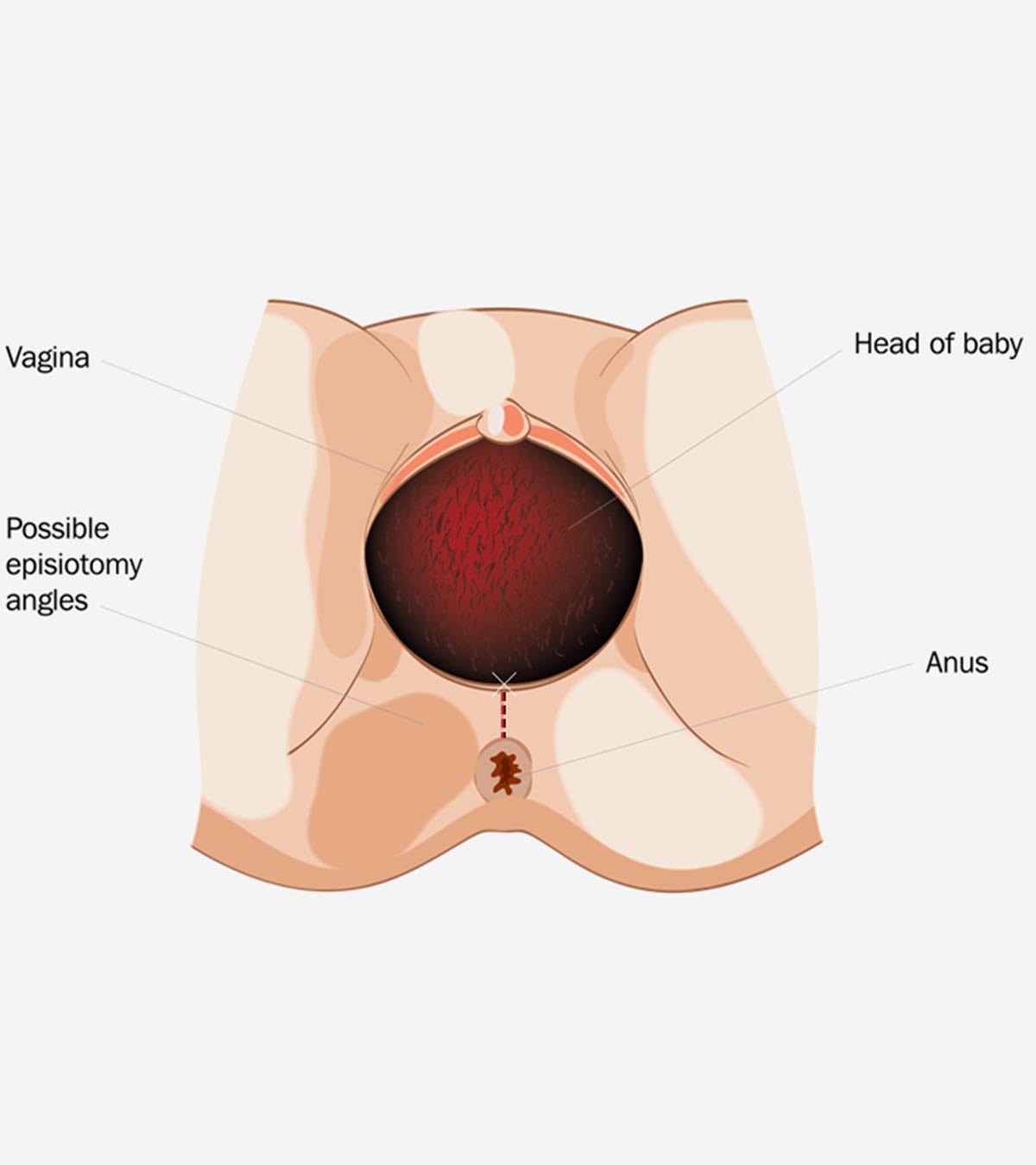 hight resolution of diagram of vagina
