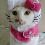 A True Hello Kitty