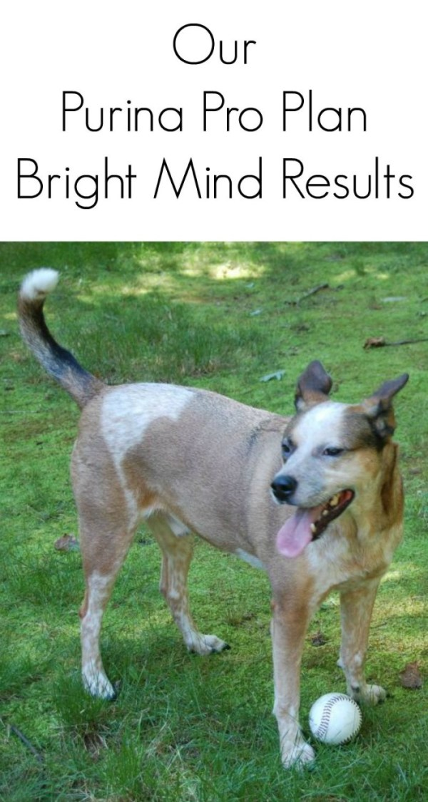 Our Purina Pro Plan Bright Mind Results