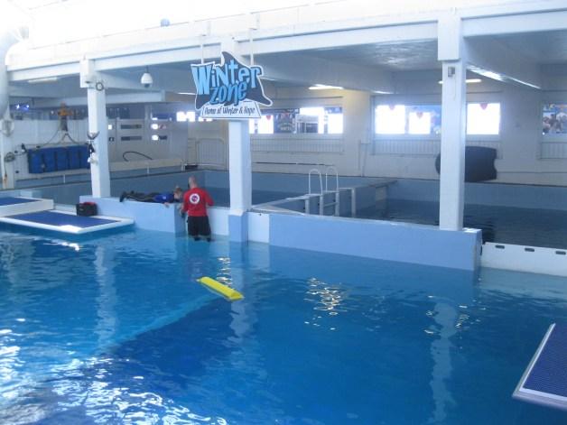 The Best Aquarium in Florida: Clearwater Marine Aquarium ...