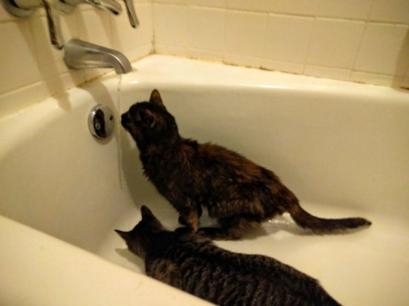 She loved running water and would stare pointedly at faucets until she got some