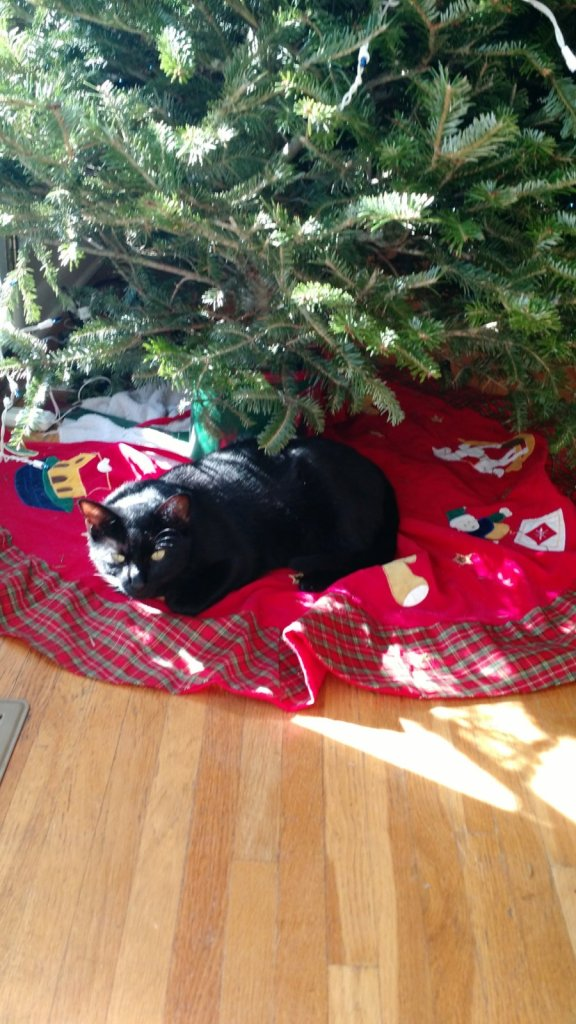 Taking a break from licking the tree