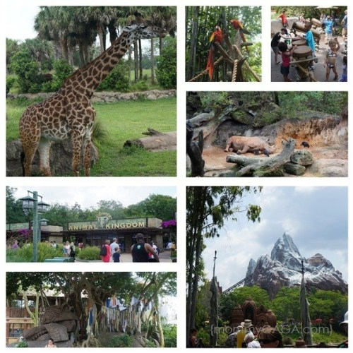Disneys Animal Kindgom, Walt Disney Wordl