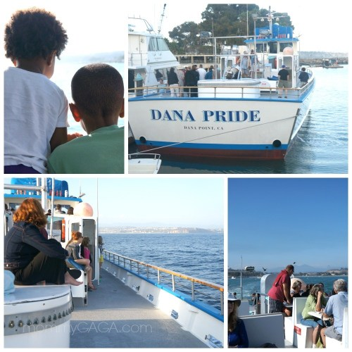 Dana Pride Boat, Whale Watching, California