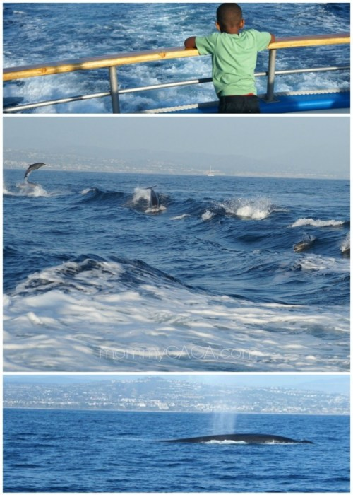 Dolphins and Blue Whales, Dana Point, CA