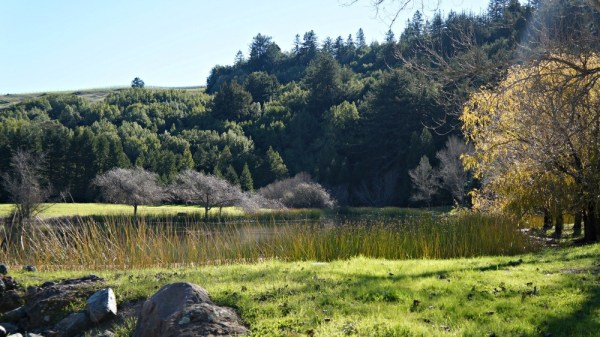 Skywalker Ranch, scenic views in the mountains, Lucas Valley, Marin County
