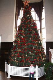 Casa Loma - big Christmas tree