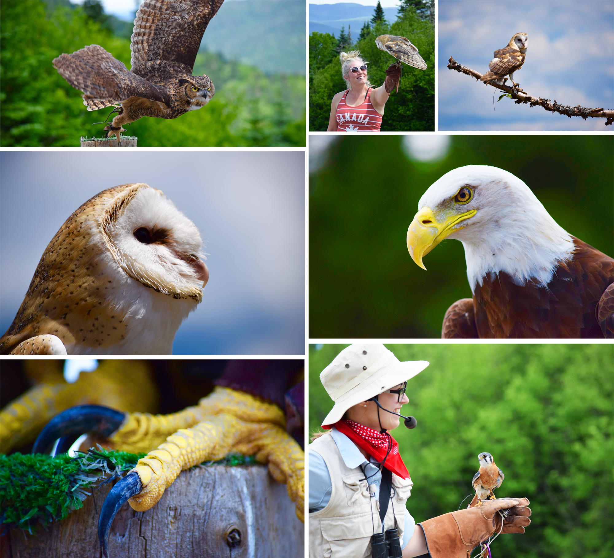 Tremblant Birds of Prey Show