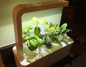 6 best indoor hydroponic grow systems and garden kits 2018. Black Bedroom Furniture Sets. Home Design Ideas