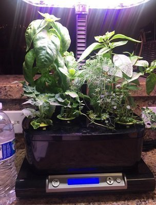 AeroGarden Harvest Wi-Fi with Gourmet Herb Seed Pod Kit