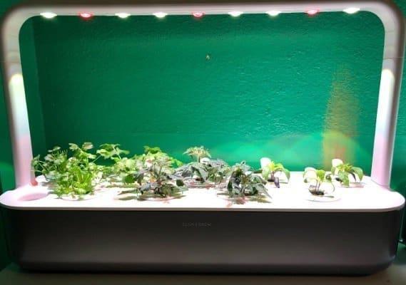 Click & Grow Smart Garden 9 Indoor Gardening Kit