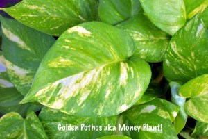6 Indoor Air purifying plants