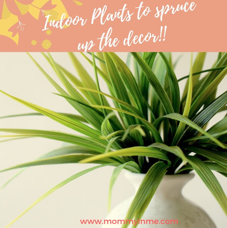 Delhi's Air Pollution has given a new reach for plants. Since Indoor Air Pollution can be 5X more than outdoors, here are some Air Purifying Plants for home. #airpurifyingplants #indoorplants #airpollution #plants #Delhi #DelhiAir #goldenpothos #MoneyPlant #Lily