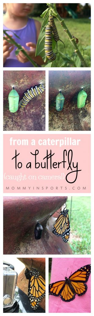 Have you ever thought of starting a butterfly garden but didn't know where to start? Watch this amazing lifecycle from a caterpillar to a butterfly and start your own garden today! Cool Go pro video too!